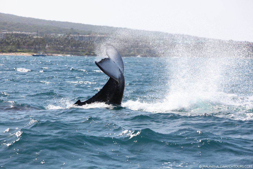 best whale photography
